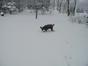 hans-dec3rd-in-snow-2