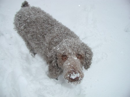 hans-dec3rd-in-snow-4